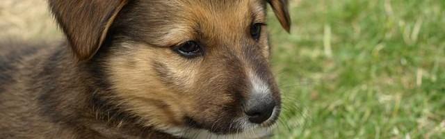 mutuelle chien en ligne