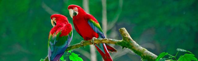 assurance mutuelle perroquet